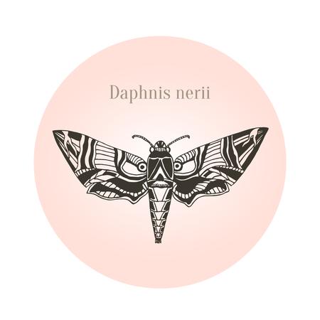 deilephila: Oleander hawk moth tattoo art. Daphnis nerii. Vector illustration Illustration