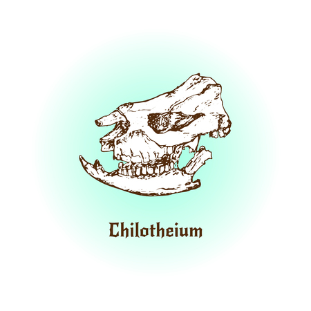 mammal: Prehistoric mammal. Chilotherium skull art.