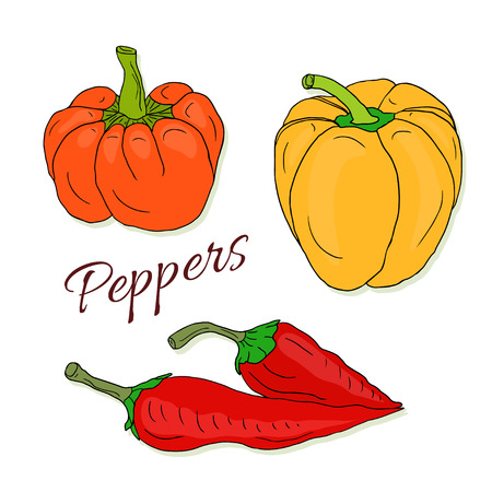 peppers: Set of vector hand drawn sketch peppers. Chili and bell pepper. Vector colorful isolated vegetables.