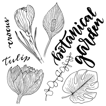 botanical garden: Flowers vector set. Hand drawn vector illustration with leaves and flowers. Vector botanical garden set. Illustration