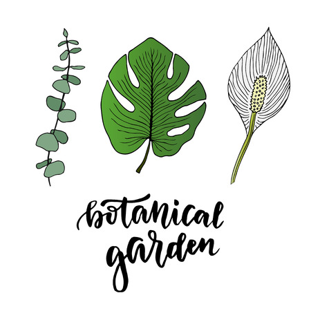 modern garden: Tropical leaves set. Hand drawn illustration with leaves and flower. Colorful tropical garden isolated elements with modern lettering