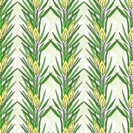 Seamless pattern with rooibos plant. Herbal tea packaging design. Vector nature print Illustration