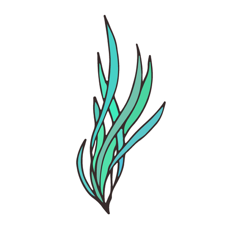 Vector seaweed illustration. Cute plant icon.