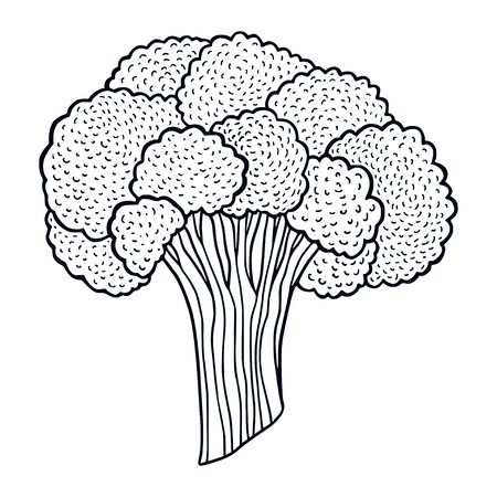 Broccoli printable illustration. Hand drawn broccoli art. Vegetable ingredient for cooking book.