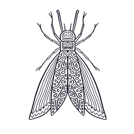 Insect illustration. Printable t-shirt design. Unique or poster. Temporary tattoo art with hand drawn insect. Interior print with fine art. Colouring book page Vetores