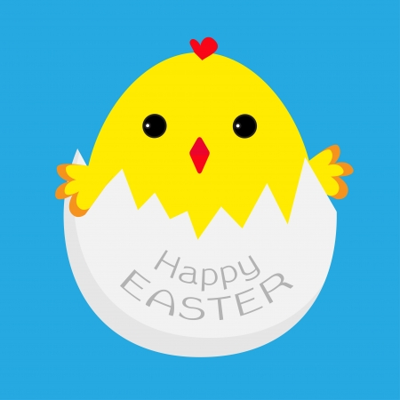 Cute easter chicken and egg shell.  Vector illustration.