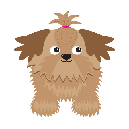shihtzu: Little glamour tan Shih Tzu dog. Isolated. Illustration