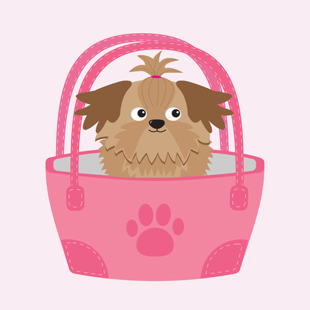 longhaired: Little glamour tan Shih Tzu dog in the bag.