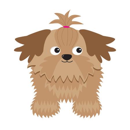 longhaired: Little glamour tan Shih Tzu dog. Isolated. Illustration