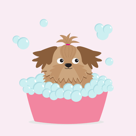little girl bath: Little glamour tan Shih Tzu dog taking a bubble bath.