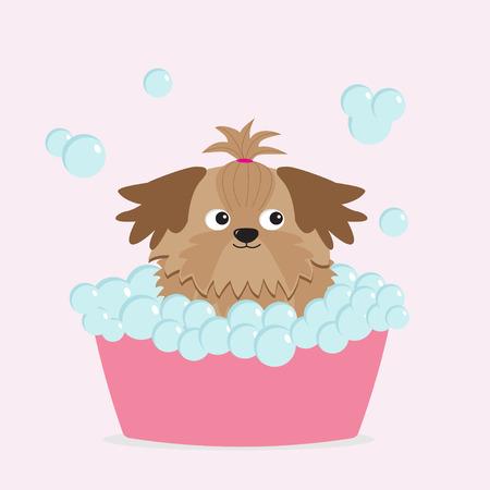 longhaired: Little glamour tan Shih Tzu dog taking a bubble bath.