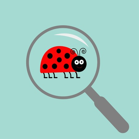 Ladybug ladybird  insect under magnifier zoom lense. Flat design. Vector illustration Vector