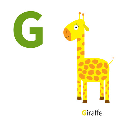 g giraffe: Letter G Giraffe Zoo alphabet. English abc with animals Education cards for kids Isolated White background Flat design Vector illustration
