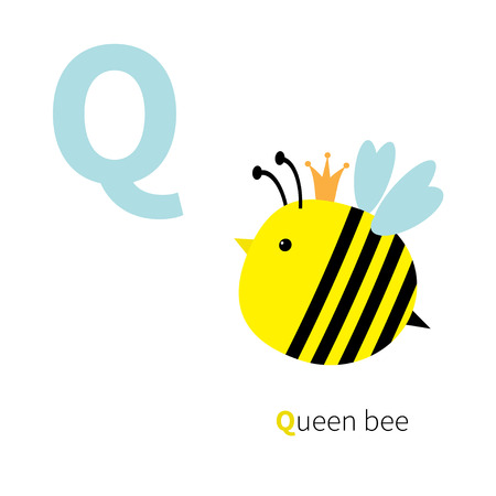 queen bee: Letter Q Queen bee Zoo alphabet. English abc with animals Education cards for kids Isolated White background Flat design Vector illustration