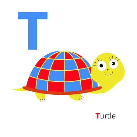 abc kids: Letter T Turtle Zoo alphabet. English abc with animals Education cards for kids Isolated White background Flat design Vector illustration Illustration