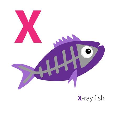 zoo: Letra X X-ray alfabeto Zoo pescado. Abc Inglés con tarjetas de animales de educación para los niños aislados Fondo blanco Diseño plano Vector ilustración Vectores
