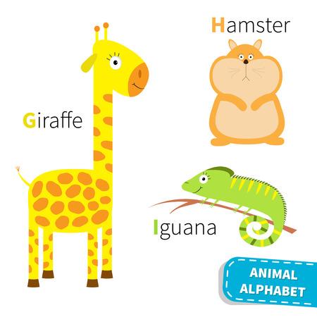 jirafa fondo blanco: Alfabeto Carta GHI jirafa Hamster Iguana Zoo. Abc Inglés con tarjetas de animales de educación para los niños aislados Fondo blanco Diseño plano Vector ilustración