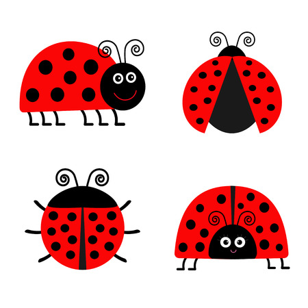 four: Ladybug Ladybird icon set. Baby background. Funny insect. Flat design Isolated Vector illustration