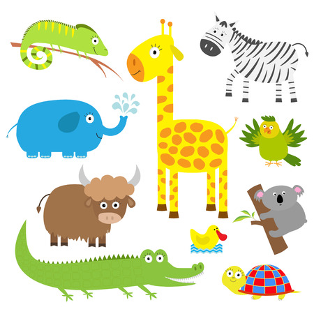 jirafa: Conjunto del animal lindo. Fondo del bebé. Koala, jirafa cocodrilo, cebra iguana, tortuga de yak, elefante, pato y el loro. Diseño plano Vector ilustración