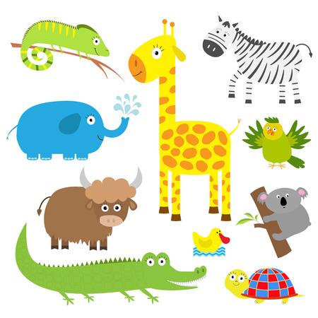 Schattige dieren set. Achtergrond baby. Koala, alligator giraf, zebra leguaan, yak schildpad, olifant, eend en papegaai. Platte ontwerp Vector illustratie