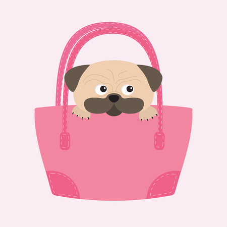 wite: Pug dog mops in the bag. Cute cartoon character. Flat design. Isolated. Wite background. Vector illustration
