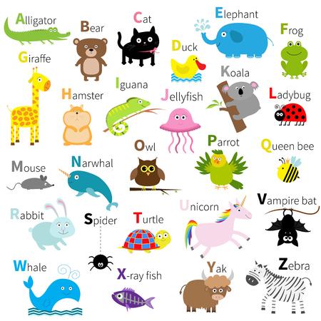 pato caricatura: Zoo alfabeto animal. establece personaje lindo. Aislado. diseño blanco. Bebé educación de los niños. Cocodrilo, oso, gato, pato, rana elefante jirafa hámster iguana Diseño plano ilustración vectorial