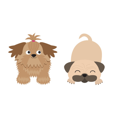 longhaired: Shih Tzu and pug mops dog set. Isolated. Flat design. Vector illustration