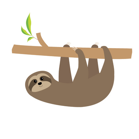 toed: Sloth hanging on tree branch . Cute cartoon character. Wild joungle animal collection. Baby education. Isolated. White background. Flat design Vector illustration