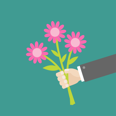 daisy pink: Businessman hand holding bouquet of pink daisy flowers. Flat design. Vector illustration