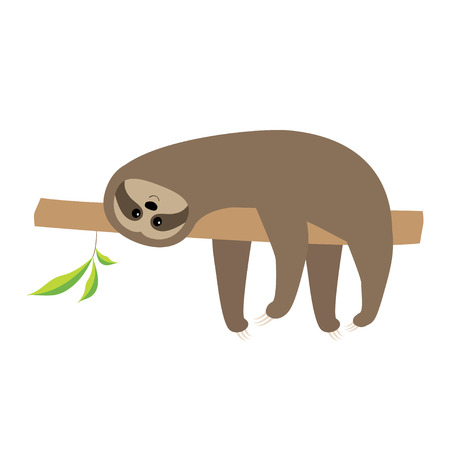 Sloth lying on tree branch. Cute cartoon character. Wild joungle animal collection. Baby education. Isolated. White background. Flat design Vector illustration
