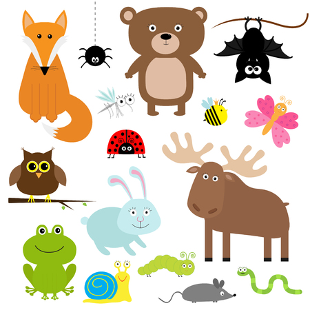 Forest animal insect set. Bear hare fox moose owl bat spider ladybug bee butterfly frog snail caterpillar worm mouse. Kids education cards. White background. Isolated. Flat design illustration