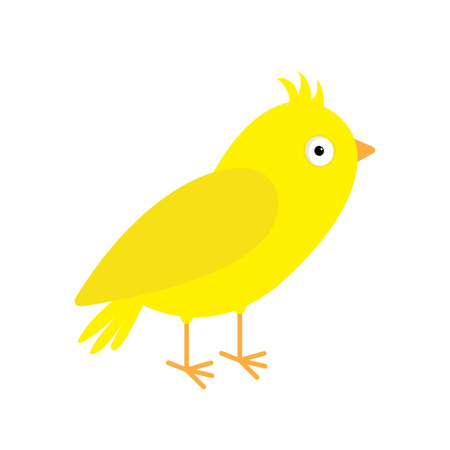canary: Canary bird. Yellow feather. Isolated  White background. Flat design style. Vector illustration