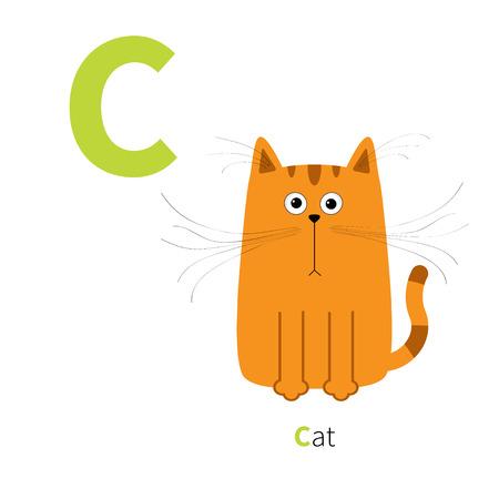 cat alphabet: Letter C Cat orange English abc with animals. Zoo alphabet. Education cards for kids Isolated White background Flat design  Vector illustration Illustration