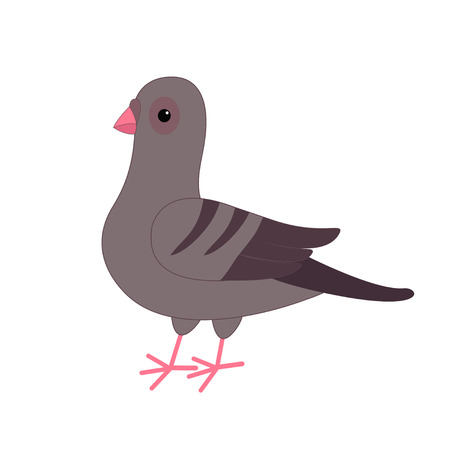 meterial: Gray Pigeon Dove bird. Cute cartoon character on white background. Isolated. Pigeon icon Flat design Vector illustration Illustration