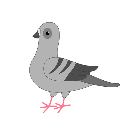 meterial: Dove bird. Gray Pigeon Cute cartoon character on white background. Isolated. Pigeon icon Flat design Vector illustration Illustration