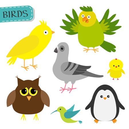 paloma caricatura: conjunto de aves. Colibri, canario, loro, paloma, búho, pingüino pollo. Lindo icono de personajes de dibujos animados. recogida de animales de zoológico bebé. El fondo blanco aislado Diseño plano Ilustración del vector
