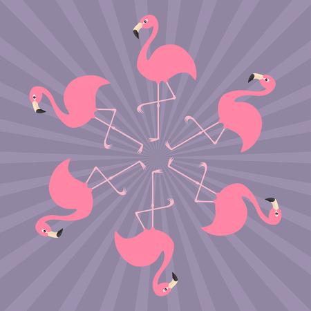 animal leg: Pink flamingo on one leg. Round circle compisition. Exotic tropical bird. Zoo animal collection. Cute cartoon character. Decoration element. Flat design. Sunburst background. Vector illustration