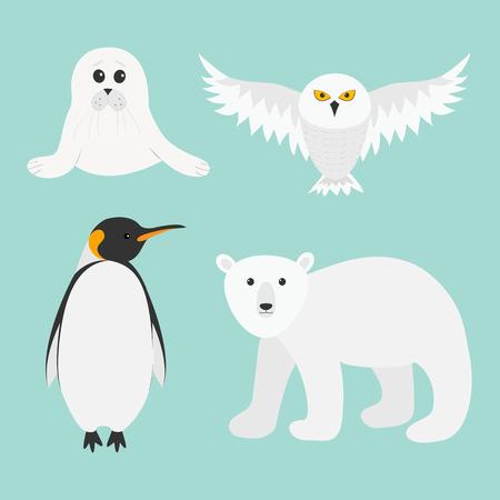background antarctica: Arctic polar animal set. White bear, owl, king penguin Emperor Aptenodytes Patagonicus, Seal pup baby harp. Kids education cards. Winter antarctica blue background Flat design. Vector illustration Illustration