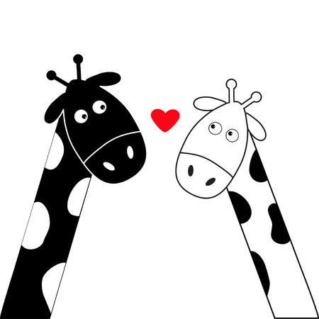 long neck: Cute cartoon black white giraffe boy and girl heart. Camelopard couple on date. Funny character set. Long neck. . Happy family. Love greeting card with little hearts. Flat design. Isolated. Vector