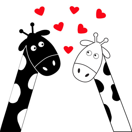 long neck: Cute cartoon black white giraffe boy and girl. Camelopard couple on date. Long neck. Funny character set. Happy family. Love greeting card with hearts. Flat design. Heart background. Isolated. Vector