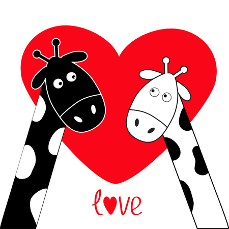 long neck: Cute cartoon black white giraffe boy and girl Big red heart. Camelopard couple on date. Funny character set. Long neck. . Happy family. Word Love Greeting card. Flat design. Isolated. Vector