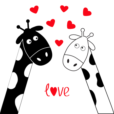 long neck: Cute cartoon black white giraffe boy and girl. Camelopard couple on date. Long neck. Funny character set. Happy family. Word Love Greeting card Little hearts. Flat design. Isolated. Vector