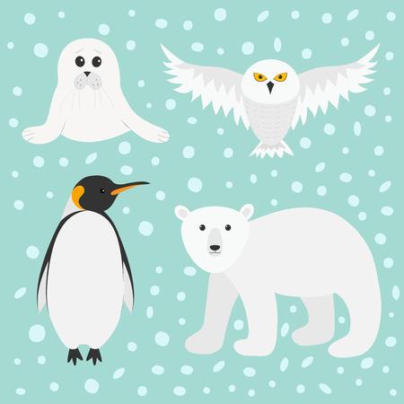 emperor: Arctic polar animal set. White bear, owl, king penguin Emperor Aptenodytes Patagonicus, Seal pup baby harp. Kids education cards. Winter antarctica blue snow background Flat design Vector illustration