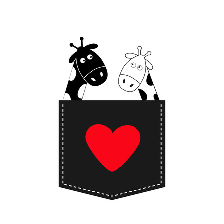 long neck: Cute cartoon black white giraffe in the pocket Boy girl and heart. Camelopard couple on date. Long neck. Funny character set. Happy family. Love greeting card. Flat design. Isolated. Vector