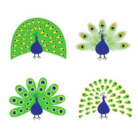 Pauw set. Veer open open staart. Mooie Exotische tropische vogel. Dierentuin collectie. Leuk cartoon karakter. Decoratie-element. Plat ontwerp. Witte achtergrond. Geïsoleerd. Vector illustratie