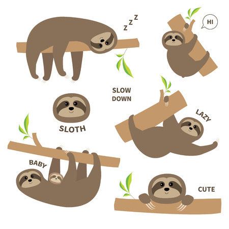 Sloth set mother with baby. Cute lazy cartoon character. Slow down text. Tree branch Wild joungle animal collection. Isolated. White background. Flat design. Vector illustration