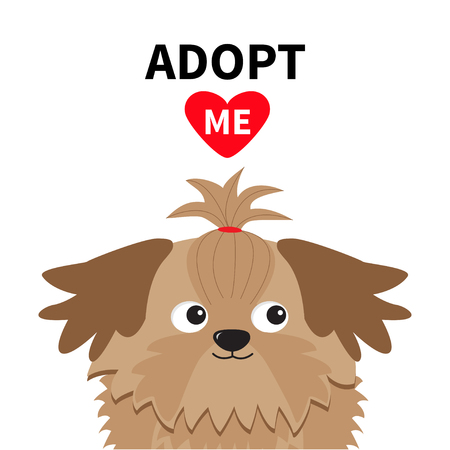 shih tzu: Adopt me. Dont buy. Shih Tzu Dog head inside opened cardboard package box. Pet adoption.