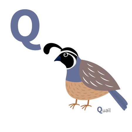 Letter Q as in quail bird for English alphabet.