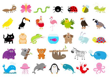 Dierentuin huisdier wild dier set leuk karakter mier, vlinder, spin, lieveheersbeestje, bijen jaguar, toucan, hond, nijlpaard, olifant, luiaard, koala, flamingo, kat vis en zebra plat ontwerp witte achtergrond vector