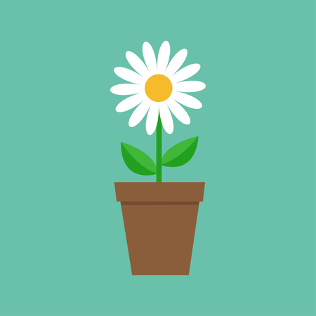 White daisy chamomile in pot. Cute flower plant collection. Love card. Camomile icon Growing concept. Flat design. Green background.